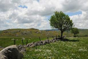 Paysage de l'Aubrac au printemps