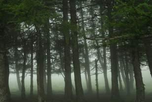 Forêt de l'Aubrac. Autrefois, les forêts recouvraient l'ensemble de l'Aubrac