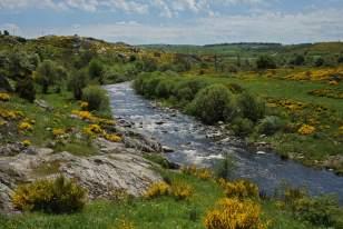 Le Bès, principale rivière de l'Aubrac, au printemps