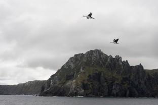 Antarctique-Patagonie-Terre-de-Feu-Cap-Horn-Cape-Horn-Cormorans