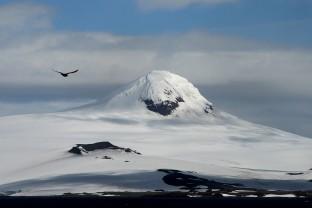 Antarctique-Peninsule-Antarctica-Bird-Landscape-Paysage