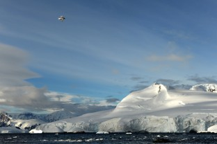 Antarctique-Peninsule-Antarctica-Paysages-Glacier-Arctic-Tern-Sterne-Arctique-14