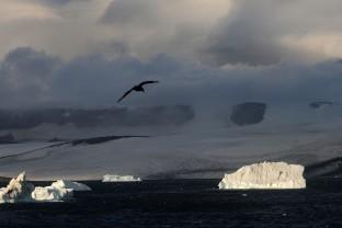 Antarctique-Peninsule-Antarctica-Paysages-Landscapes-icebergs-18