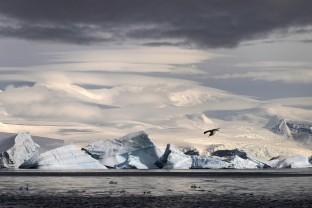 Antarctique-Peninsule-Antarctica-Sterne-Arctique-Arctic-Tern-Glacier