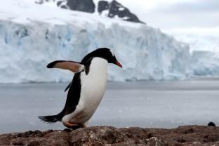 Antarctique-Peninsule-Antarctica-manchot-A-et-glaces