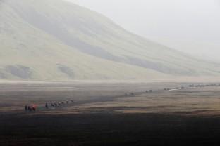 13-Joly-Islande-Iceland-Highlands-Rettir-Transhumance-Moutons-Fjallabak-Jokulgil