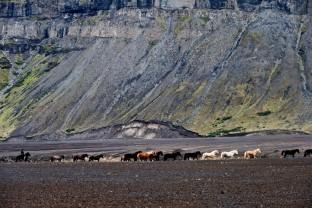 20-Joly-Islande-Iceland-Highlands-Rettir-Transhumance-Moutons-Fjallabak-Jokulgil