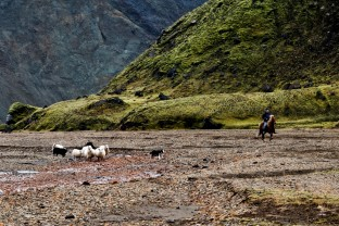 33-Joly-Islande-Iceland-Highlands-Rettir-Transhumance-Moutons-Fjallabak-Jokulgil