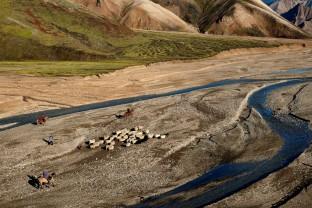 34-Joly-Islande-Iceland-Highlands-Rettir-Transhumance-Moutons-Fjallabak-Jokulgil