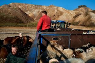 40-Joly-Islande-Iceland-Highlands-Rettir-Transhumance-Moutons-Fjallabak-Jokulgil