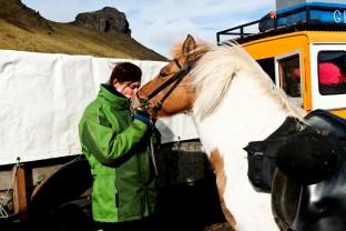 41-Joly-Islande-Iceland-Highlands-Rettir-Transhumance-Moutons-Fjallabak-Jokulgil