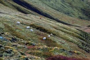 69-Joly-Islande-Iceland-Highlands-Rettir-Transhumance-Moutons-Fjallabak-Jokulgil