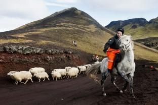 73-Joly-Islande