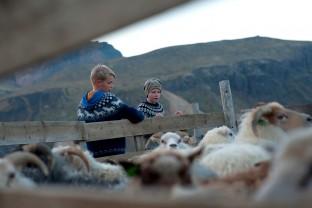 80-Joly-Islande-Iceland-Highlands-Rettir-Transhumance-Moutons-Fjallabak-Jokulgil