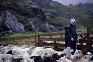 84-Joly-Islande-Iceland-Highlands-Rettir-Transhumance-Moutons-Fjallabak-Jokulgil