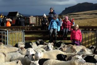 90-Joly-Islande-Iceland-Highlands-Rettir-Transhumance-Moutons-Fjallabak-Jokulgil
