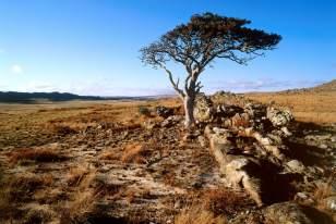 Madagascar-hauts-plateaux-Itremo-Désert