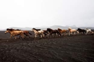 Reportage texte et photos sur la transhumance des moutons en Islande (réttir), Highlands, Région de Fjallabak, Landmannalaugar